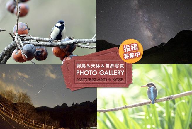 天体&野鳥写真ギャラリー