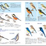 見る読むわかる野鳥図鑑中身